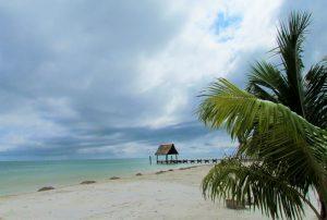 caribbean ocean, sandy beach, coconut tree