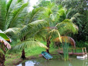 fish pond, coconut trees, boat