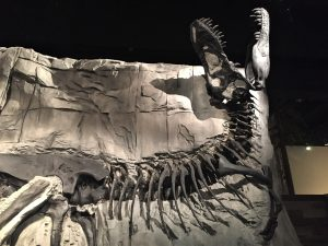 Royal Tyrrell Museum dinosaur fossil