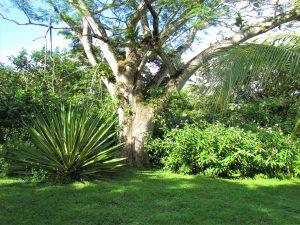 large tree, backyard garden