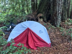camping site at Avenue of the Giants