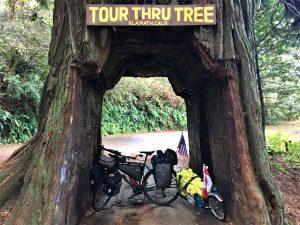 bike in large tree