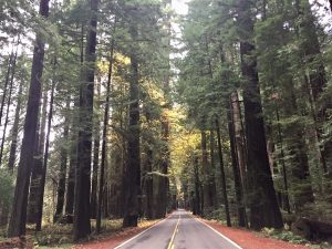 Avenue of the Giants highway